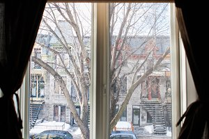 Window Looking Out on Tree Street