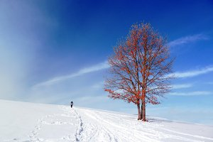 person walking in winter landscape