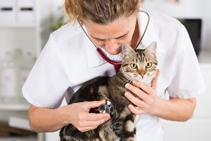 Veterinary by listening to a cat