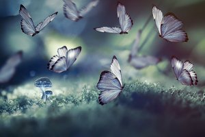 Huge butterflies and the little glow