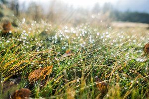 Dew on the grass close up