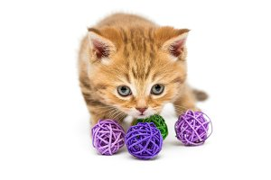 Little orange kitten and balls