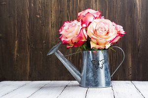 Beautiful pink rose in a tin watering can