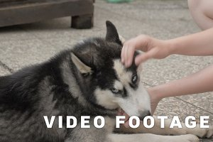 Girl caresses a husky dog