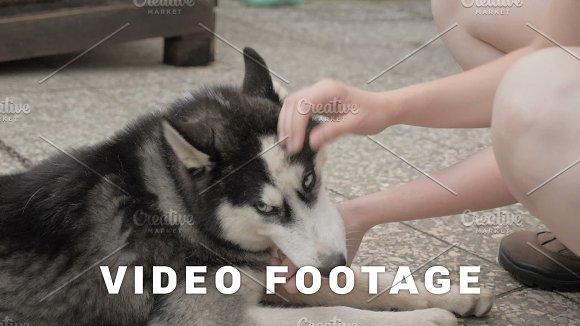 Girl caresses a husky dog