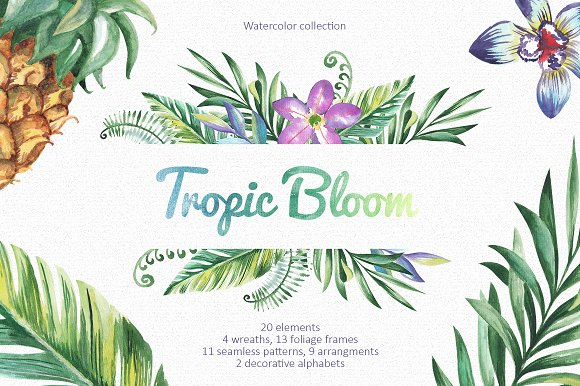 Tropic Bloom Collection in Illustrations