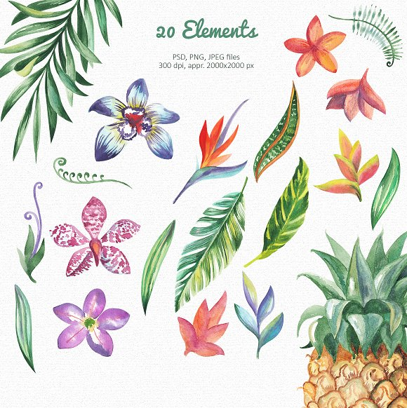 Tropic Bloom Collection in Illustrations - product preview 1
