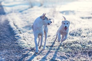 Two dog playing outdoor in the field at cold sunny autumn morning.