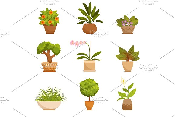 House plants, decorative flowers indoors. Vector illustrations in cartoon style