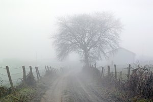 foggy countryside road at morning