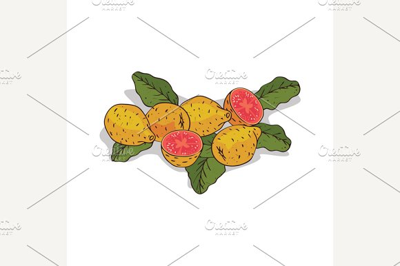 Isolated clipart Guava