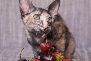 I like cherry