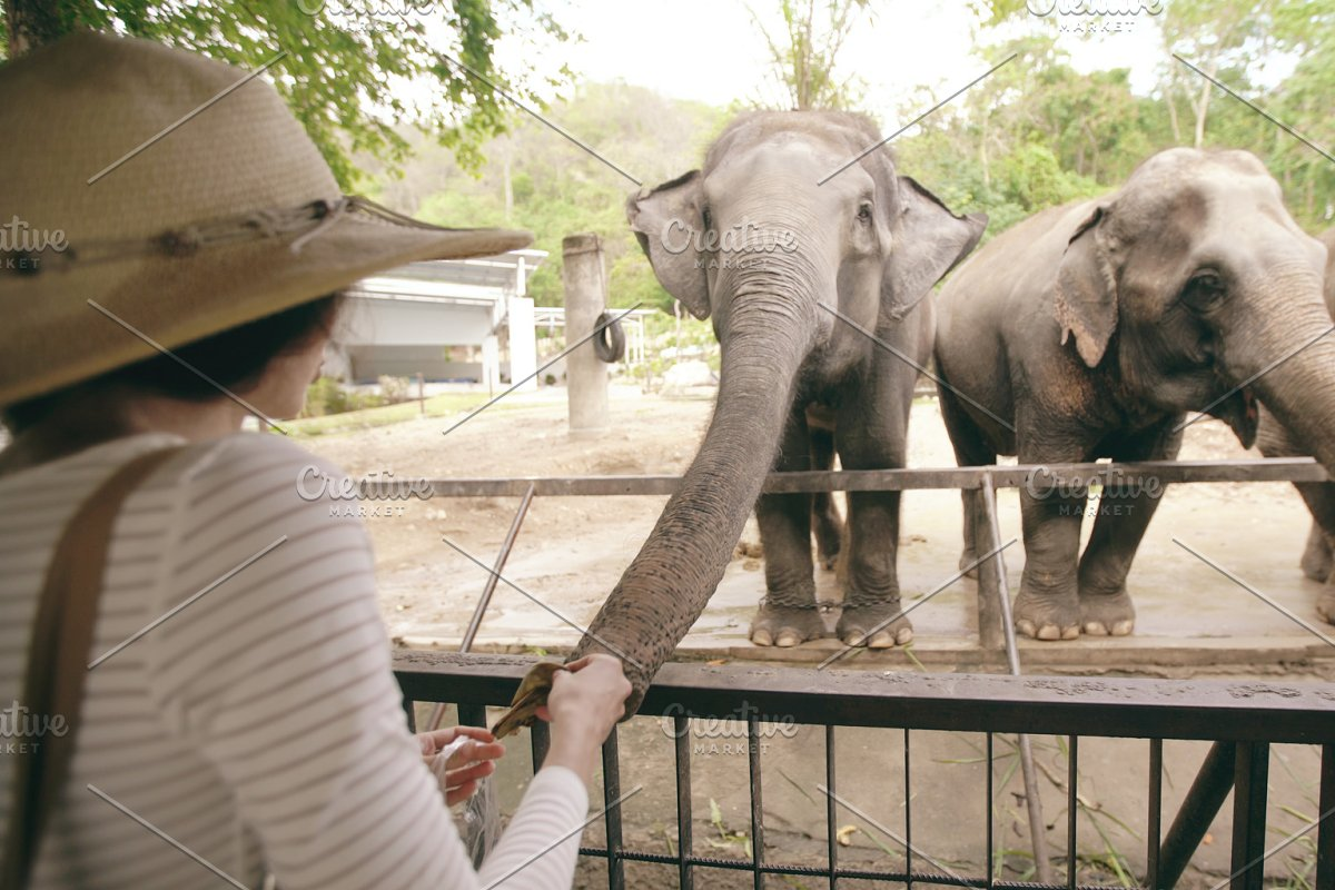 Young woman traveler feeds the elephant in the zoo in Thailand national park