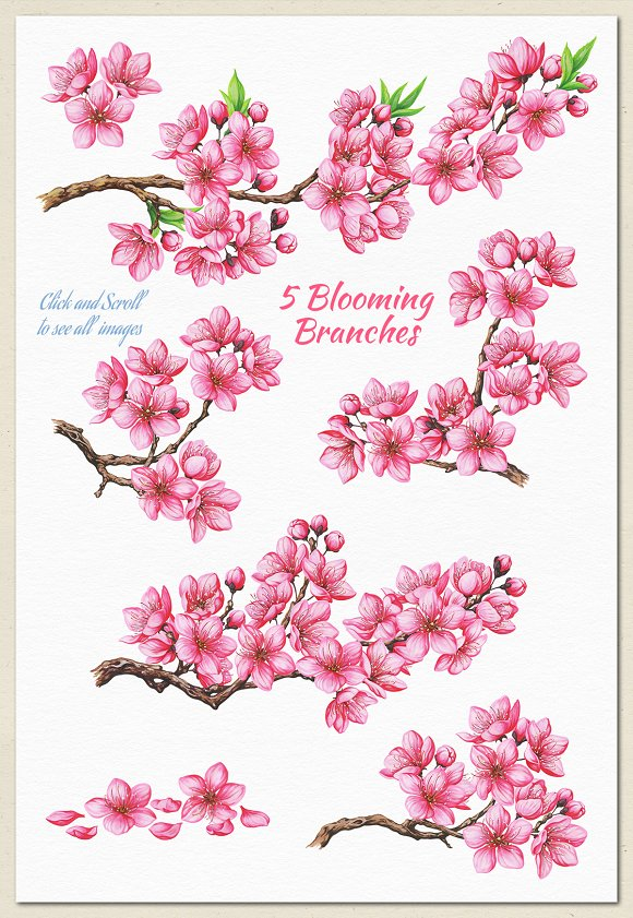 Cherry Blossom. Hand Painted Set in Illustrations - product preview 2