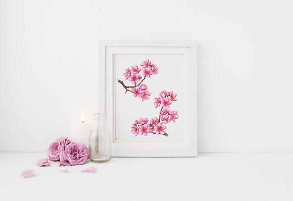 Cherry Blossom. Hand Painted Set in Illustrations - product preview 3