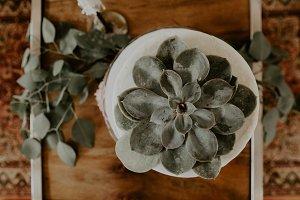 Succulent Cake Top