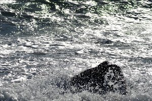 Backlight of the sea with waves