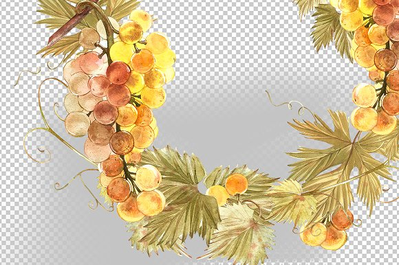 Grapes in botanical style in Illustrations - product preview 5