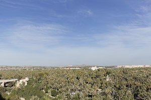 Palm grove of Elche city.