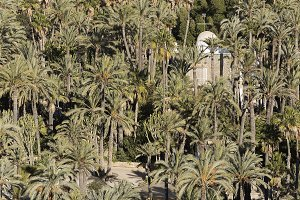 Palm grove of Elche city