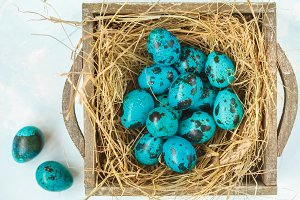 Easter quail eggs in the nest