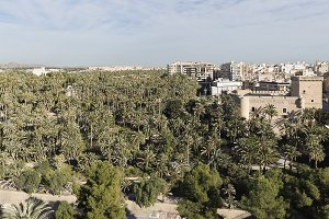 Views of the city of Elche i