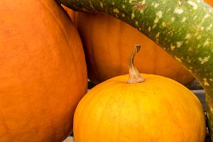 Pumpkins and gourd in stack