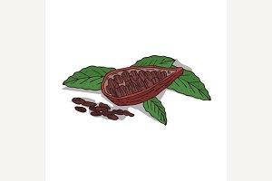 Isolated clipart Cocoa