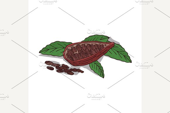 Isolated clipart Cocoa