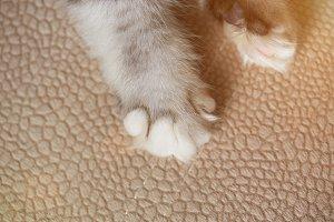 Cat paw on carpet close-up