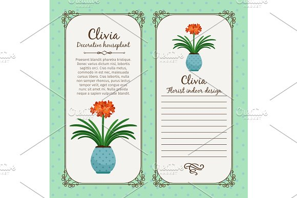 Vintage label with clivia plant