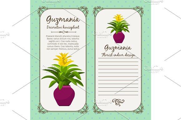 Vintage label with guzmania plant