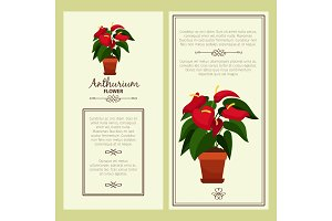 Anthurium flower in pot banners