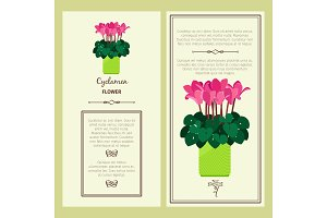 Cyclamen flower in pot banners