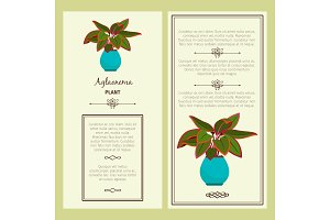 Greeting card with aglaonema plant