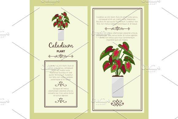 Greeting card with caladium plant