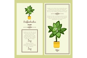Greeting card with dieffenbachia plant