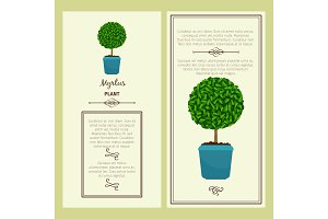 Greeting card with myrtus plant
