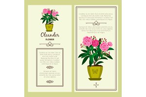 Oleander flower in pot banners