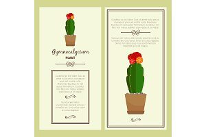 Greeting card with gymnocalycium plant