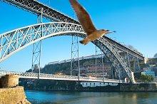 Seagull and bridge, Porto, Portugal