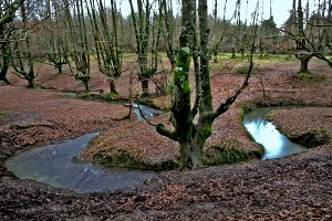 river in the beech forest
