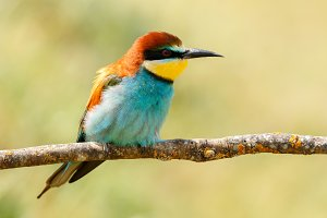 Small colorful bird