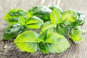 Green basil herbs