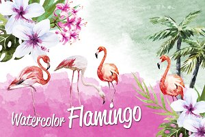 Tropic flamingo watercolor set