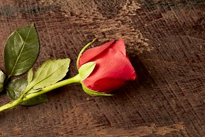 Red roses on wooden