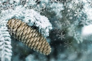 Pine cone in winter with snowflake