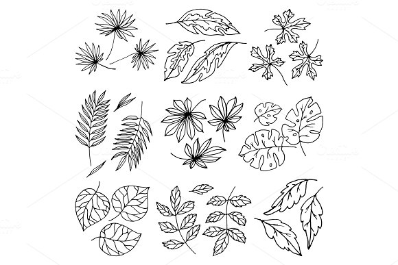Vector black leaves palm tree leaf summer nature white illustration design isolated on white background tropical plant leaflet foliage art exotic leafy branch silhouette
