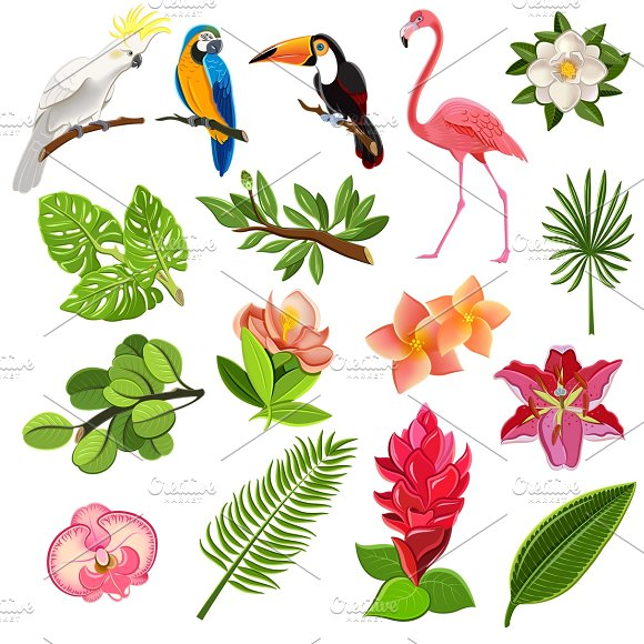 Tropical birds and plants pictograms