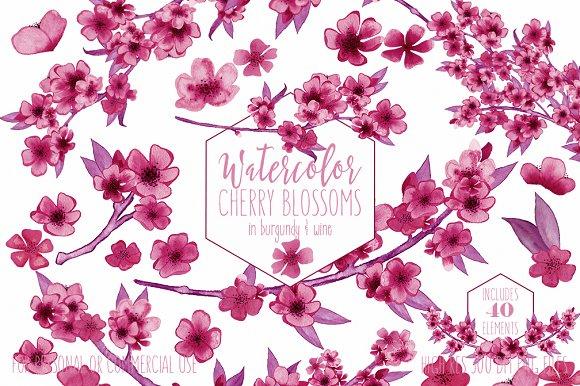 Burgundy Watercolor Sakura Floral in Illustrations